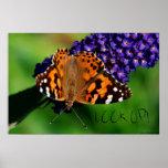 ¡La mariposa de monarca, MIRA PARA ARRIBA! , Poste Poster
