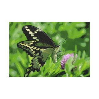 La mariposa de Swallowtail estiró la impresión de  Impresion De Lienzo