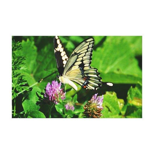 La mariposa de Swallowtail estiró la impresión de  Impresión En Lona