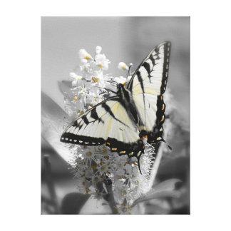 La mariposa de Swallowtail estiró la impresión de  Impresiones En Lona
