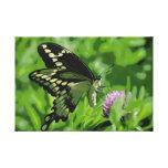 La mariposa de Swallowtail estiró la impresión de  Lienzo Envuelto Para Galerías