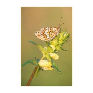 La mariposa del Fritillary de la centaurea Impresión En Lona