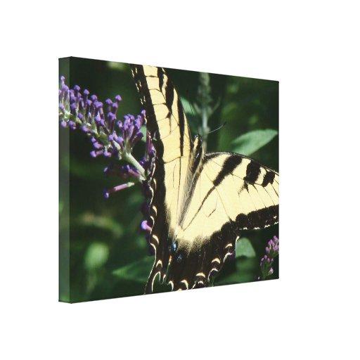 La mariposa envolvió la impresión de la lona impresion en lona