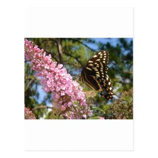 ¡La mariposa perfecta! Postales