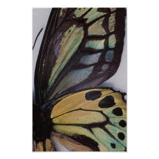 La mariposa se va volando el poster