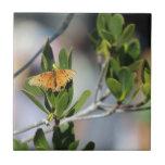 La mariposa teja