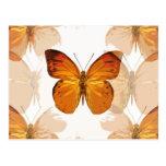 La mariposa vuela postales