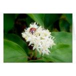 La mariquita en las flores blancas tarjetón