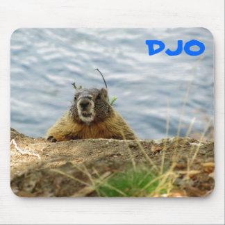 """¿La marmota de Spokane dice, """"sorbo? ¿Consiguió un Mouse Pads"""