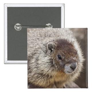 La marmota en Palouse cae parque de estado Pin Cuadrada 5 Cm