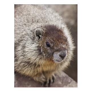 La marmota en Palouse cae parque de estado Tarjetas Postales