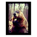 La marmota y el cacahuete tarjeta postal