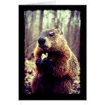 La marmota y la tarjeta de felicitación del cacahu