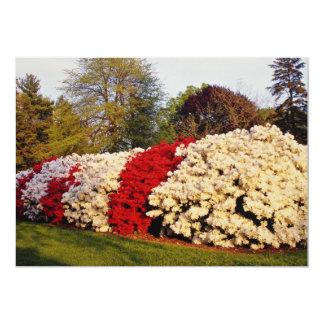 La masa roja de los arbustos de la azalea comunicado personalizado