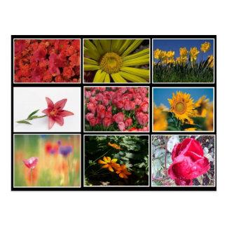 La mayoría de la postal hermosa del collage de las