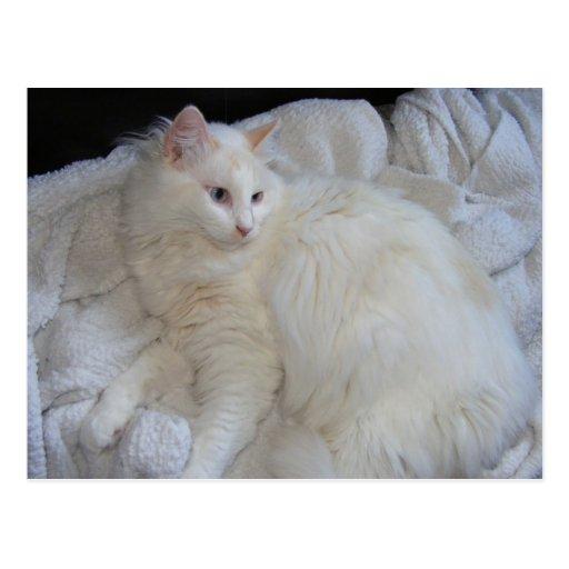 La mayoría de la postal magnífica del gato