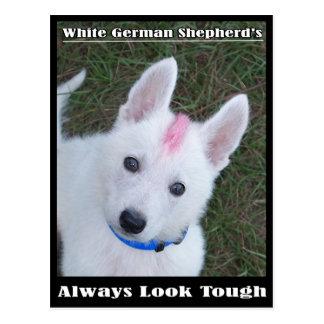 La mirada del pastor alemán siempre dura postal