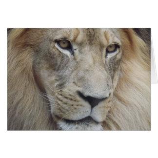 La mirada fija de un león tarjeta pequeña