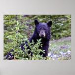 La mirada fija del oso negro poster