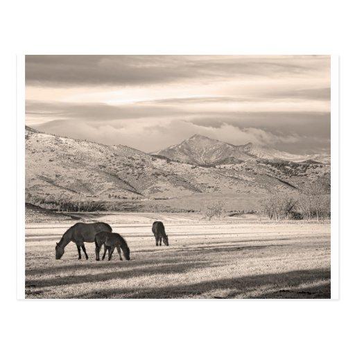 La montaña rocosa Colorado desea mañana máxima del Tarjetas Postales