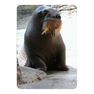 La morsa del parque zoológico en tierra seca invitación 12,7 x 17,8 cm