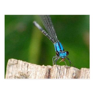 la mosca azul del dragón tarjetas postales