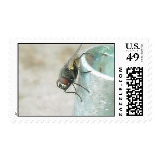 La mosca de 7m m sello