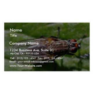 La mosca fastidia insectos tarjetas de visita