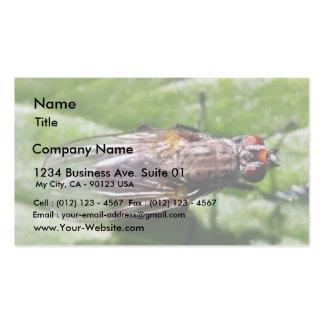 La mosca fastidia insectos plantillas de tarjetas de visita