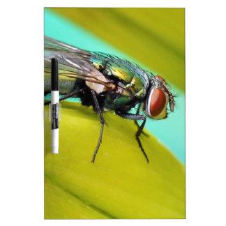 La mosca pizarras