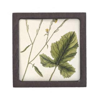 """La mostaza, platea 446 """"de un herbario curioso"""", l cajas de regalo de calidad"""