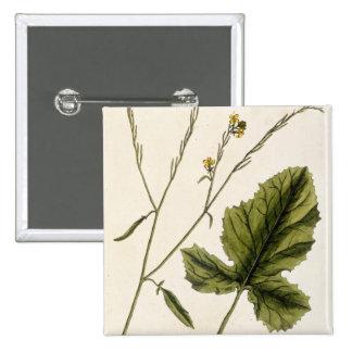 """La mostaza, platea 446 """"de un herbario curioso"""", l pins"""