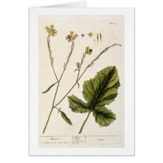 """La mostaza, platea 446 """"de un herbario curioso"""", l tarjeta de felicitación"""