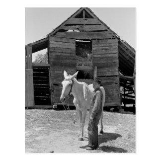 La mula del granjero de arrendatario, los años 30 postal