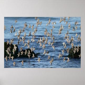 La multitud de aves costeras vuela sobre el embarc impresiones