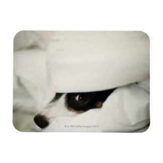 La nariz de perro que se pega hacia fuera de lecho imán de vinilo