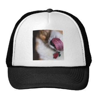 La nariz se lame gorra