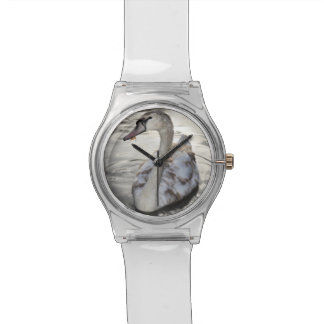 La naturaleza encanta el reloj del cisne