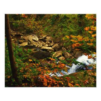 La naturaleza habla impresion fotografica
