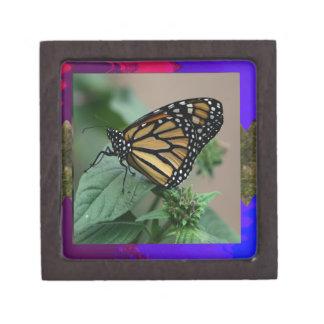 La naturaleza LINDA del insecto de la mariposa Cajas De Joyas De Calidad