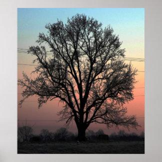 ¿La naturaleza o consolida? Póster