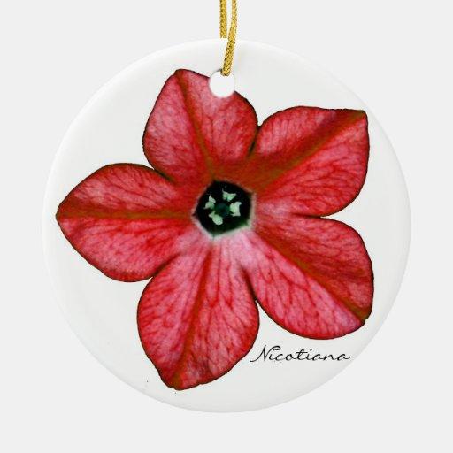 La nicociana roja florece el ornamento adorno redondo de cerámica
