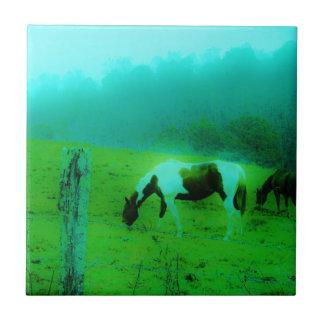 La niebla Reto del trullo coloreó el caballo pinta Azulejo
