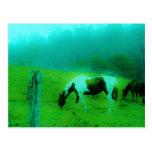 La niebla Reto del trullo coloreó el caballo pinta Tarjeta Postal