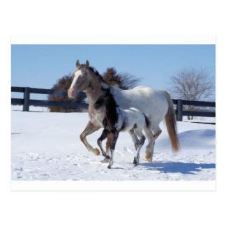 La nieve del invierno de los caballos se divierte  tarjeta postal