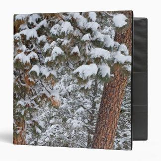 """La nieve llena las ramas de los árboles de pino carpeta 1 1/2"""""""