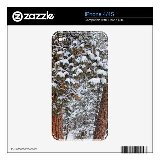 La nieve llena las ramas de los árboles de pino po calcomanías para el iPhone 4