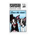 La novia y el novio de Boston Terrier ahorran Sello