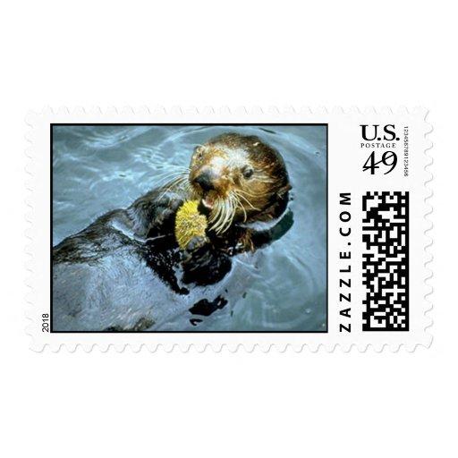 La nutria de mar come a un pilluelo timbre postal