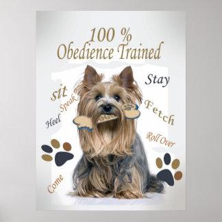 La obediencia de Yorkie el 100 entrenó al poster